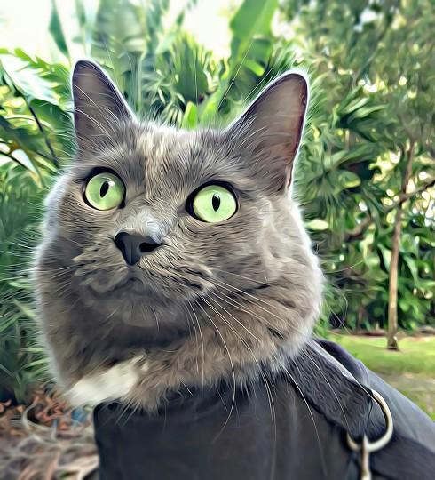 cat scratch wound treatment
