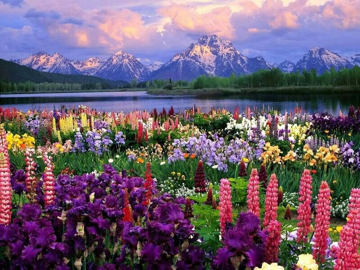 Wish I lived here so I can lay in the flowers all day :)